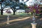 Purple dendrobium orchid ceremony pieces
